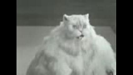 Реклама Котка Се Опитва Да Отслабне