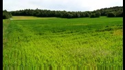 grass field norway dream2