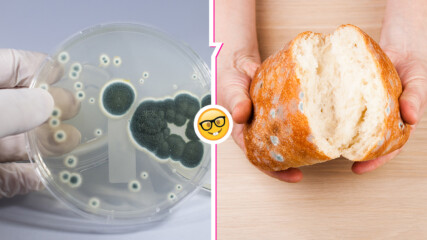 Да хапнеш нещо мухлясало е гадно, но какво се случва с тялото ни? Ето някои варианта