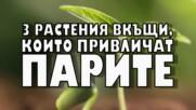 3 растения вкъщи, които привличат парите