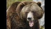 мечка2