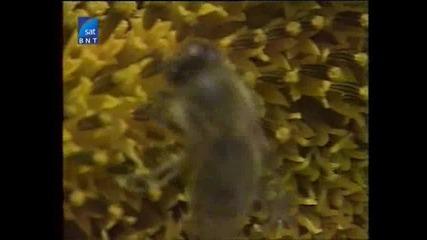 Насаме с пчелите(bg Audio) 7 част