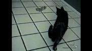 Котка пука балон и се стряска