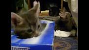 Сладко Котенце И Неговата Кутия