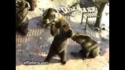 Сладки Мечки В Зоопарка
