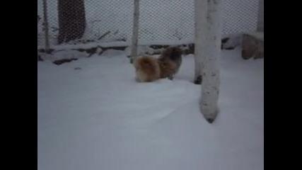 сладко зимно кученце