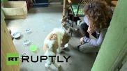 Germany: Meet Nicki, the human-like mini pony standing at just 45cm tall!