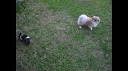 Лола и Хес