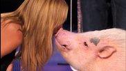 Прасе става звезда и целува Хайди Клум в Америка търси таланти 2014