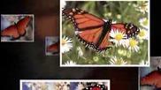 Butterfly Waltz - Tamalo - Stamatis Spanadokias