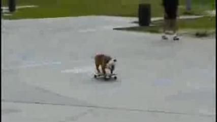 Лудо куче кара скейтборд