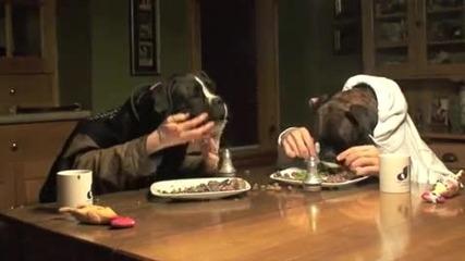 Два боксера с човешки ръце вечерят