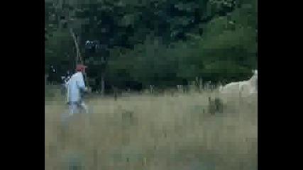 Овчар Псува