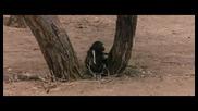 Как да излъжеш маймуна...