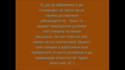 Съвършенните бобри :)