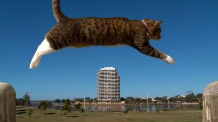 Паркур за котки