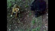 лов за прасета Драгановец