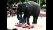 Слон Масажист :):):)