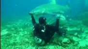 Да погалиш тигрова акула!!!