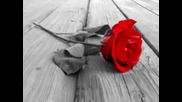 Гергана - Роза с бодли