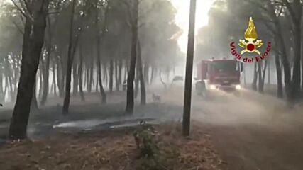 Italy: EU sends four firefighting planes to battle ongoing Sardinia blaze