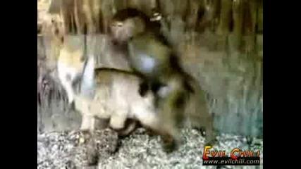 100% Смях - Маймунка и Агне