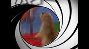 Лудата Катерица - 007
