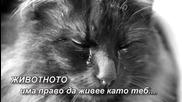 Животните също имат чувства...