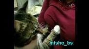 Умна котка пипа гърдите на стопанката си!