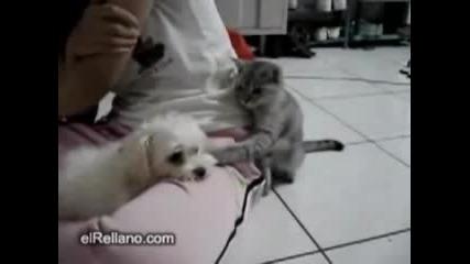 Котка Се Закача С Куче И После ...