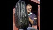 Световен Рекорд - Най - големите Плодове и Зеленчуци в Света
