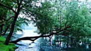 Emir Basic- Zelena rijeka 1974