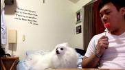 Сладко кученце което се срамува да поиска парченце диня