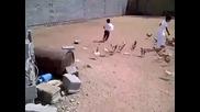 Гладни кокошки гонят дете