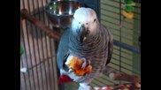 Папагалите също ядат пица.