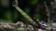 Странна Хавайска гъсеница