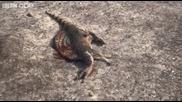 Планетата на динозаврите - Spinosaurus