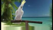 Реклама с адски смешен папагал