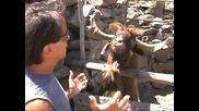 Човек говори с плюеща коза - Много смях