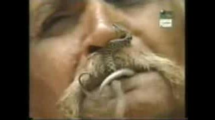 Човек Яде Змии И Една Го Захапва За Носа
