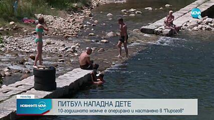 Повдигнаха обвинение на собственика на питбула, нахапал дете в Самоков