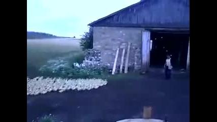 Добре дресирани патици