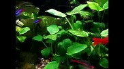 My home aquarium 4
