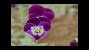 Poema - melody - R. Clayderman