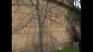 Wall Tricks