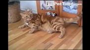 тази котка е осиновила доста чужди мъничета