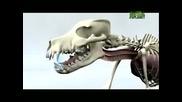 Beagle - Animal Planet