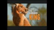 Кралят на кенгурата