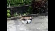 Голям смях - Кученце и котка се борят 2