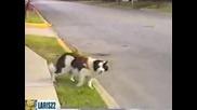 Куче се замайва от колите
